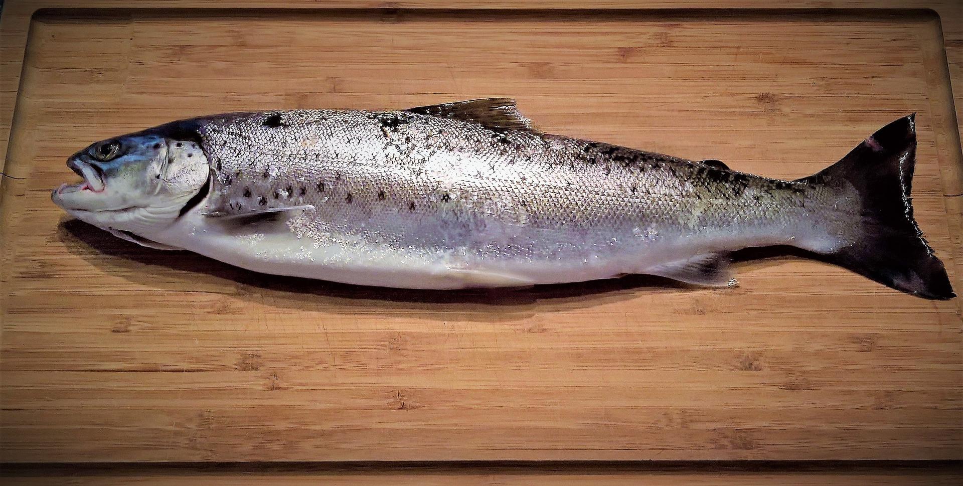 Mäta längden hos fiskar