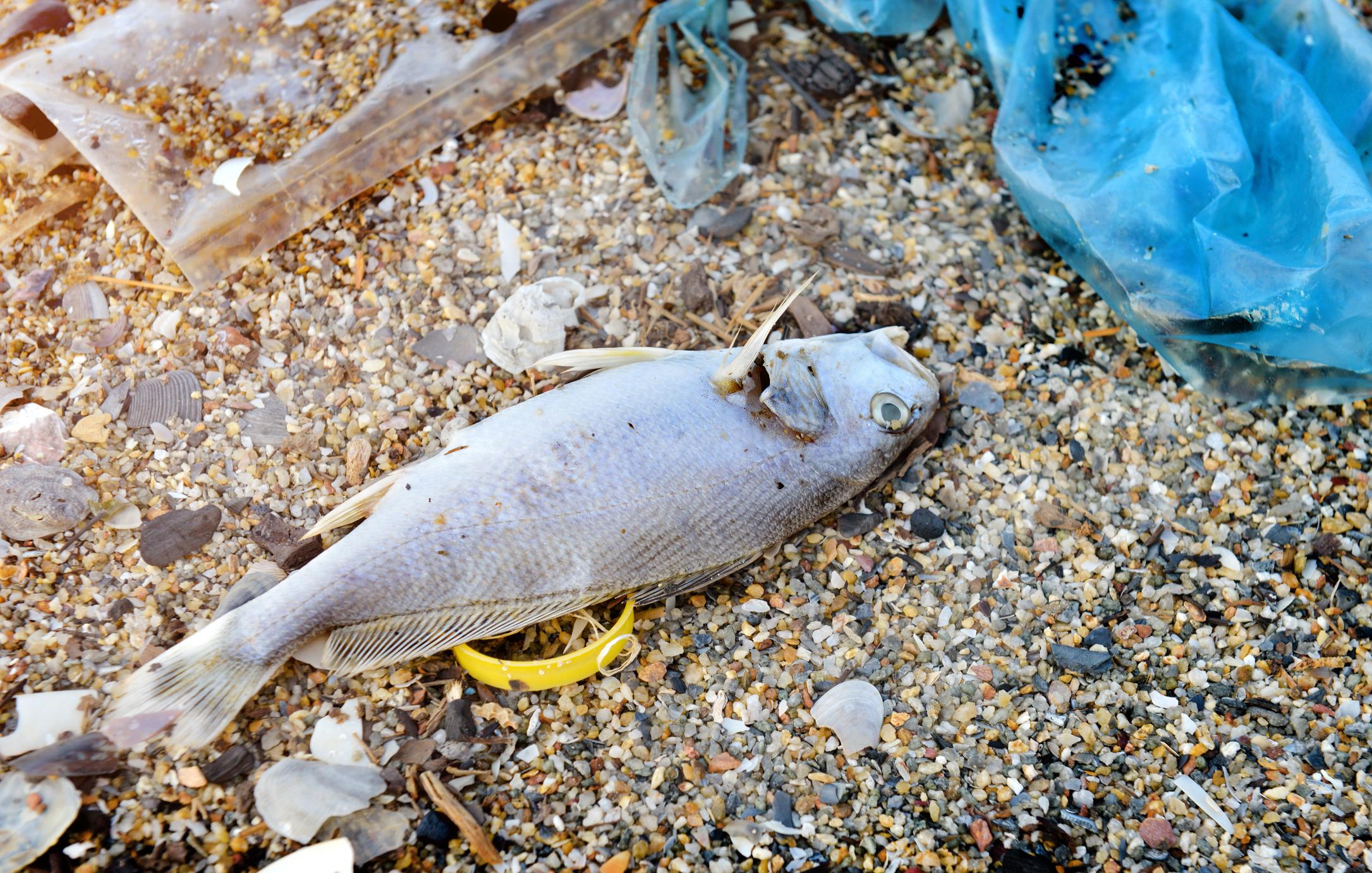 Rapportering om sjuka fiskar